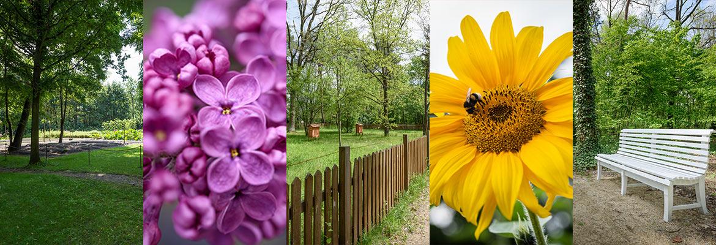 zdjęcia kwiatów i ogrodu Milusina